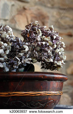 Picture of Dried Hydrangea Flower in Wood Bowl k20063937.