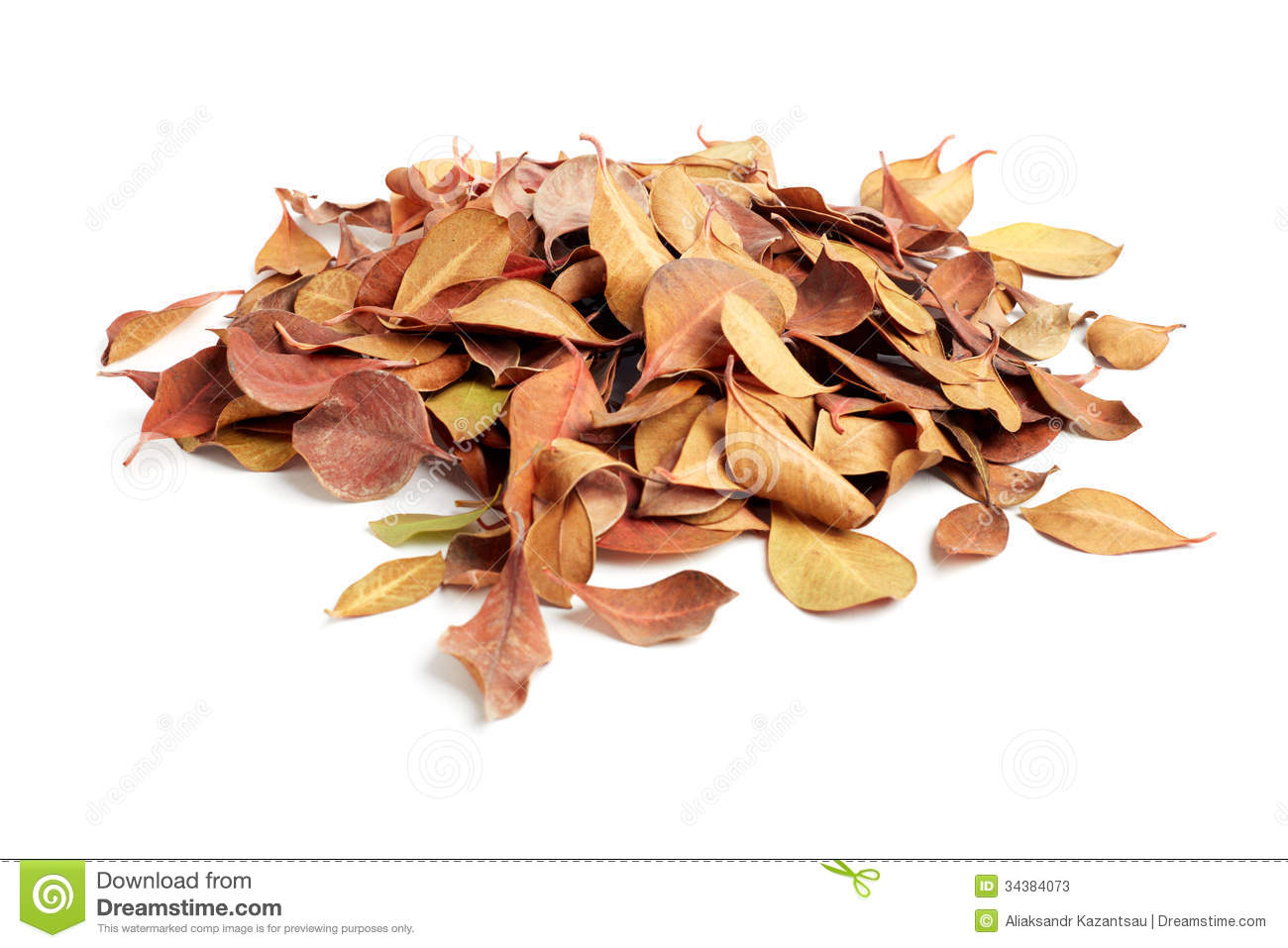 Heap Of Dry Leaves On White Background Royalty Free Stock Images.