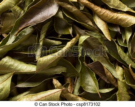 Stock Photo of close up of dried indian curry leaves food.