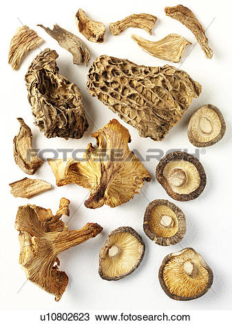 Stock Photo of Assorted Dried Mushrooms.