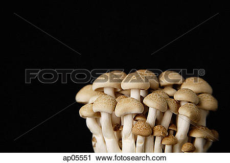 Stock Photography of Dried mushrooms against black background.