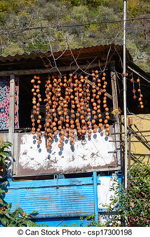 Stock Photographs of Bunches of dried persimmons hanging under the.