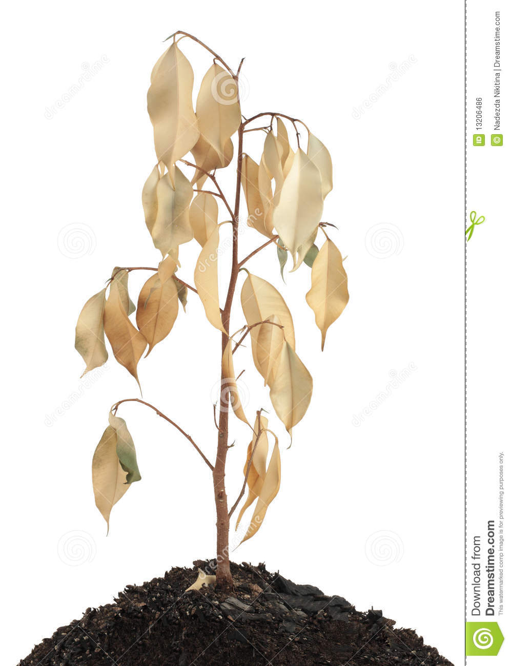 Dried plant clipart.