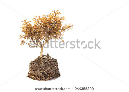Dry Plants Stock Photos, Royalty.