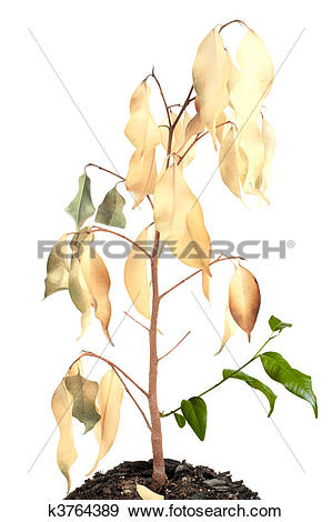Stock Photograph of dried plant with young shoots k3764389.