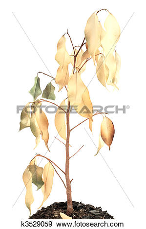 Stock Photograph of dried plant k3529059.
