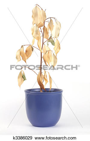 Stock Photograph of dried plant k3386029.