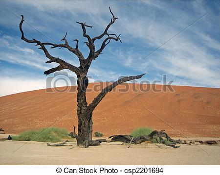 Stock Photo of dry tree etched against sanddune.
