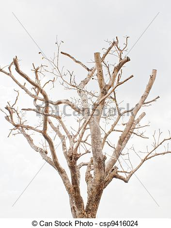 Dried trees clipart - Clipground