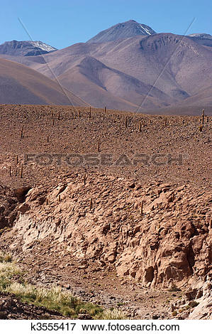 Picture of Dry riverbed with cacti, Atacama Desert, Chile k3555417.