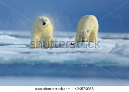 Polar Stock Photos, Royalty.