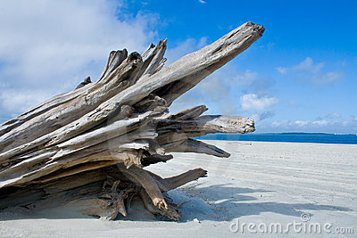 Old Driftwood Isolated On White Royalty Free Stock Image.