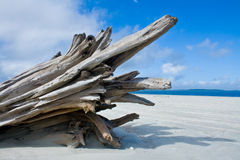 Driftwood By The Ocean Stock Photo.