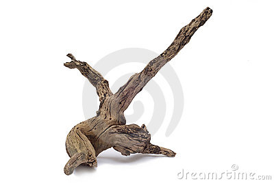 Driftwood Royalty Free Stock Image.