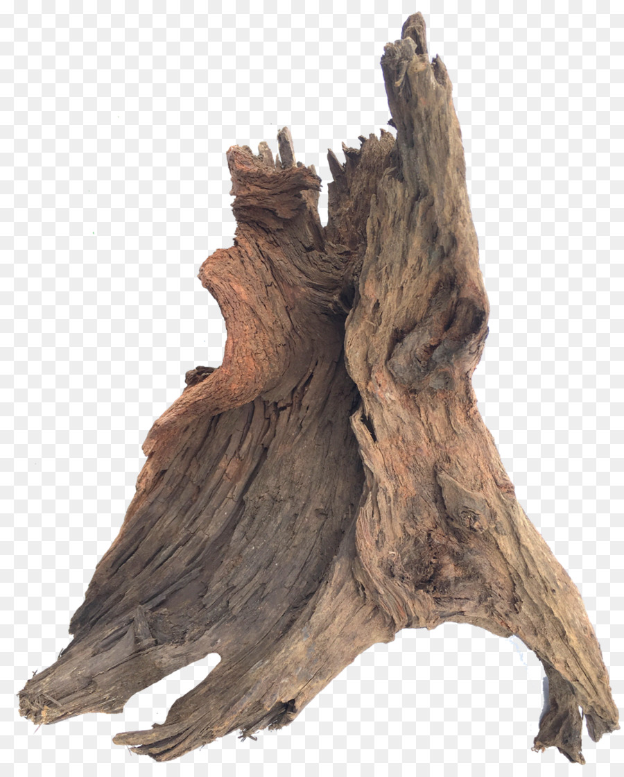 Tree Stump png download.