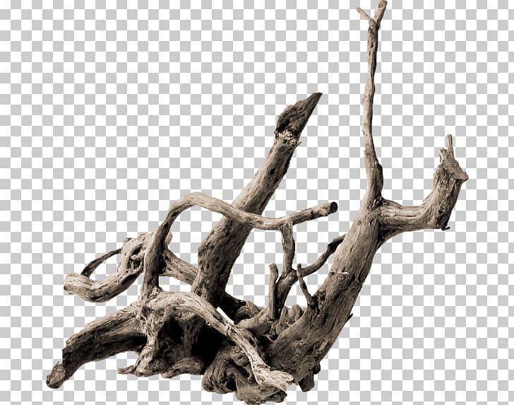 Root Tree Driftwood .de Trunk PNG, Clipart, Aquarium, Azalea, Barb.