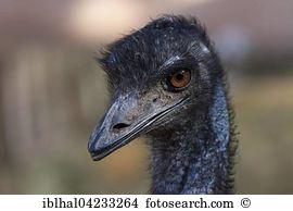 Canary bird Images and Stock Photos. 2,202 canary bird photography.