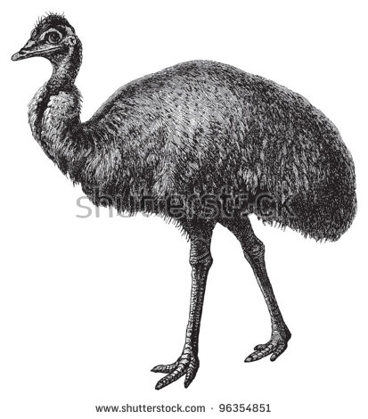 Emu Stock Photos, Royalty.