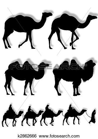Dromedary Illustrations and Stock Art. 217 dromedary illustration.