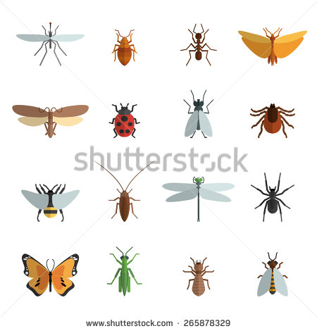 Insects Stock Photos, Royalty.