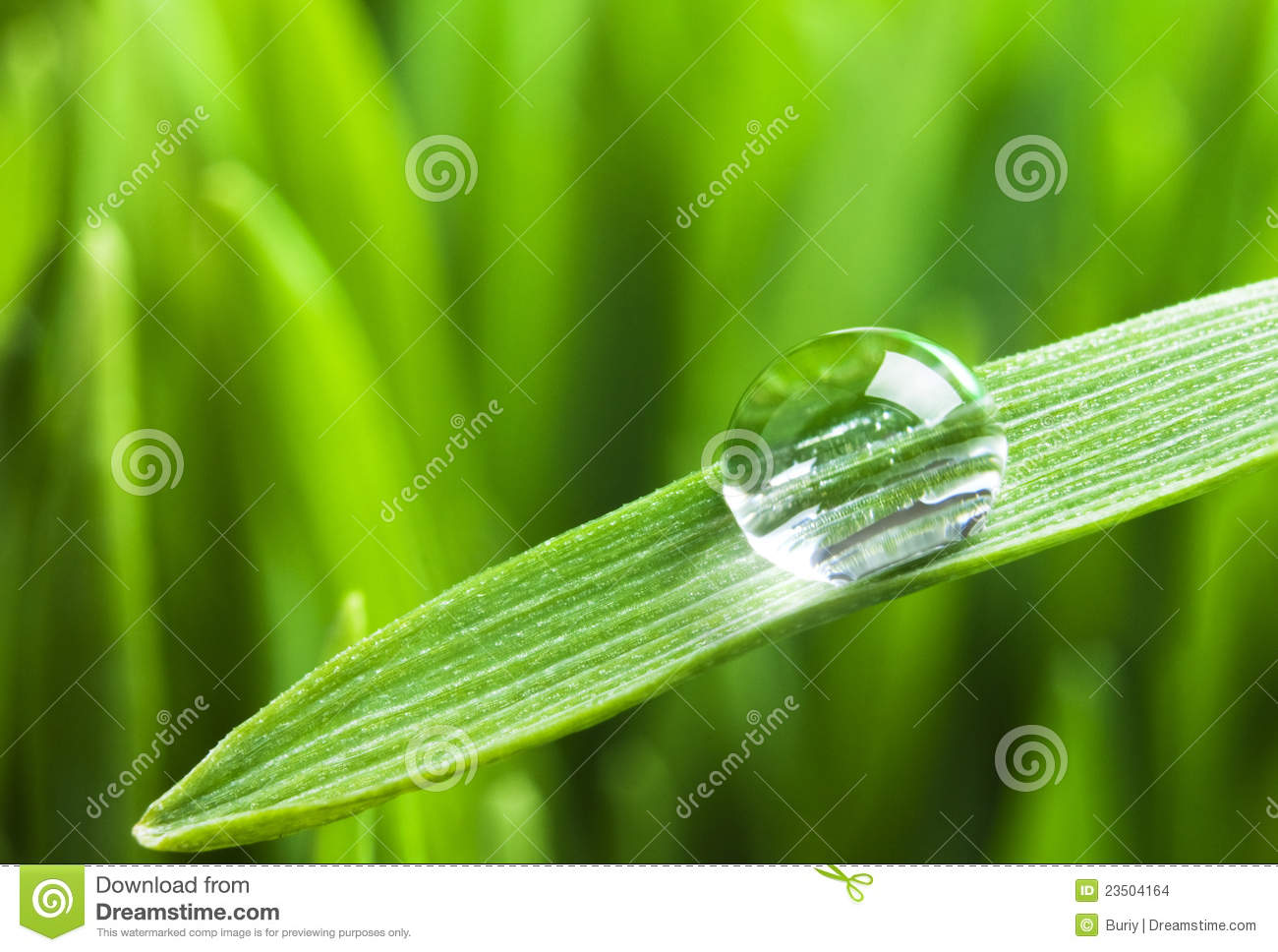 Morning Dew Stock Images.