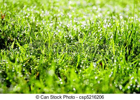 Stock Image of Wet Grass.