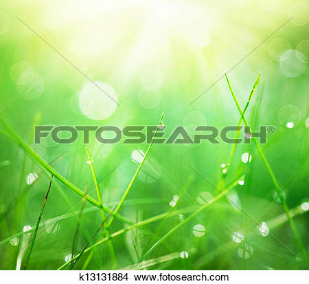 Stock Photo of Grass with Morning Dew Drops closeup. Abstract.