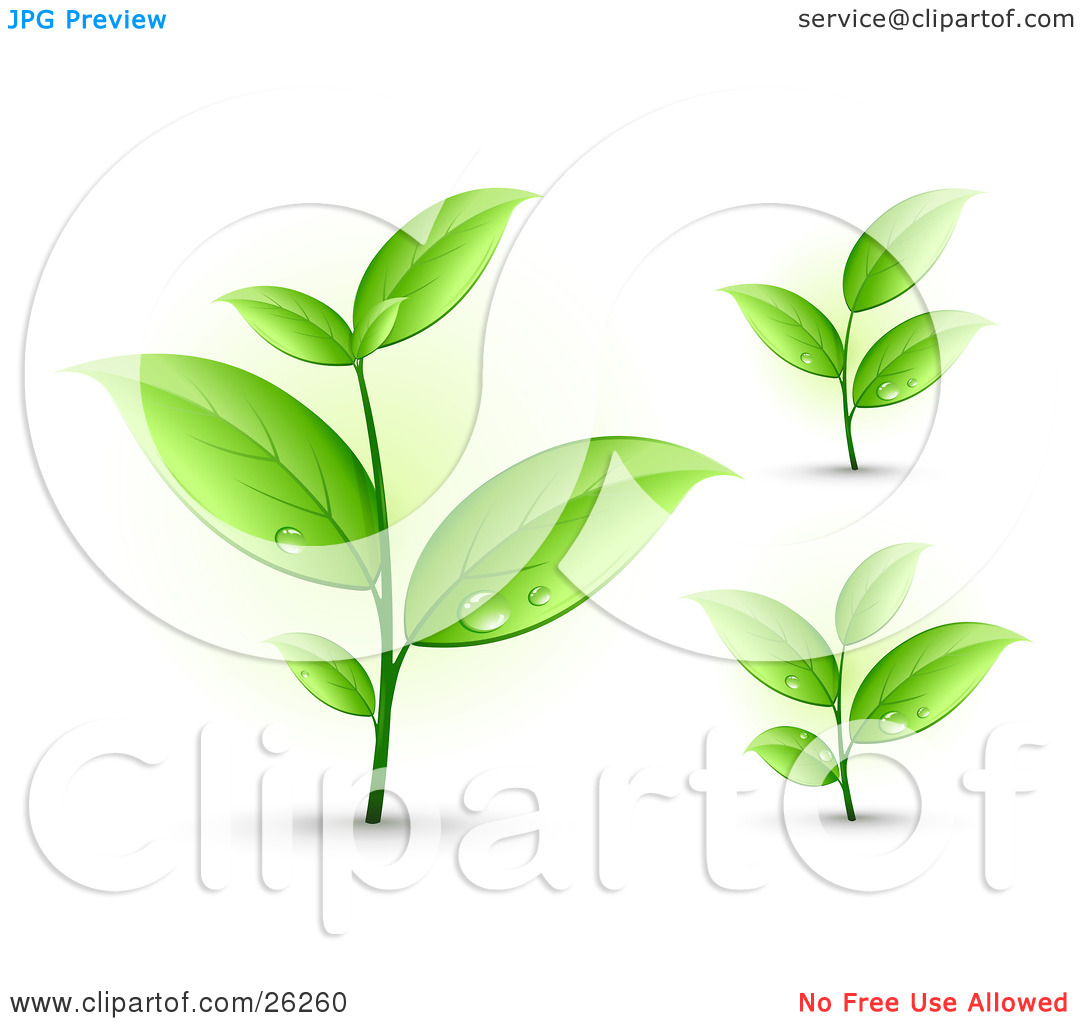 Clipart Illustration of Three Sprouting Plants With Dew Drops On.