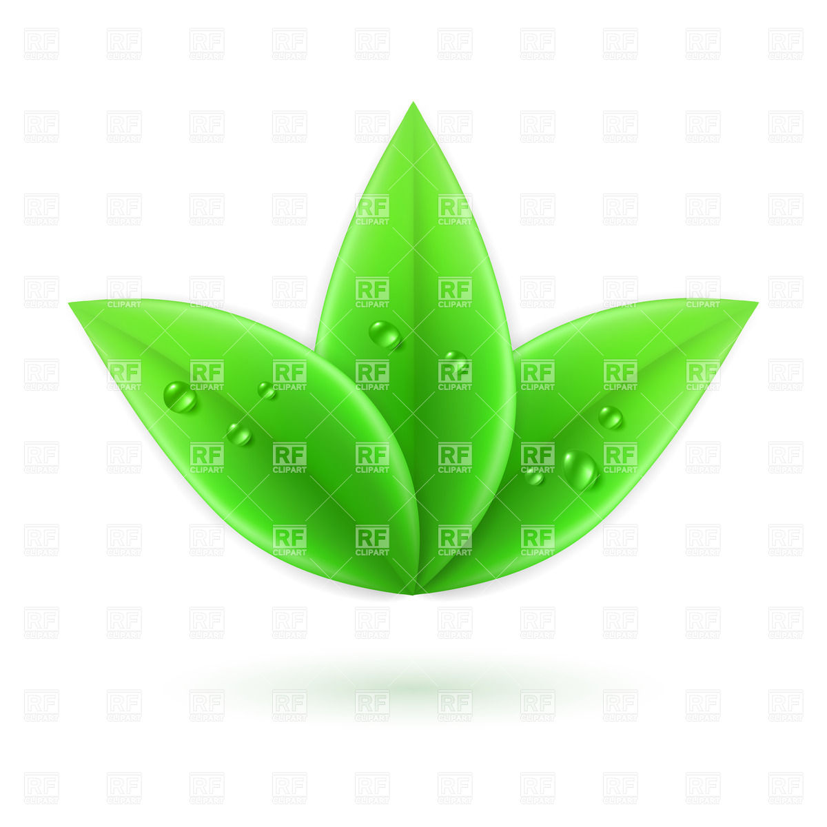 Three green leaves with water drops Vector Image #26789.