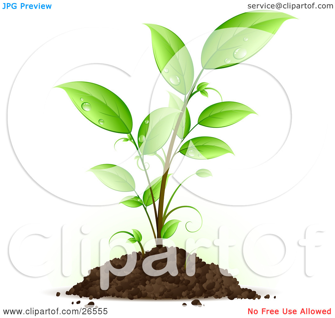 Clipart Illustration of a Seedling Plant With Drops Of Dew.