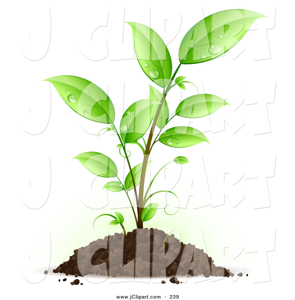 Vector Clip Art of a Green Seedling Plant with Drops of Dew.