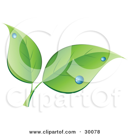 Clipart Illustration of Two Sprouting Green Leaves With Drops Of.