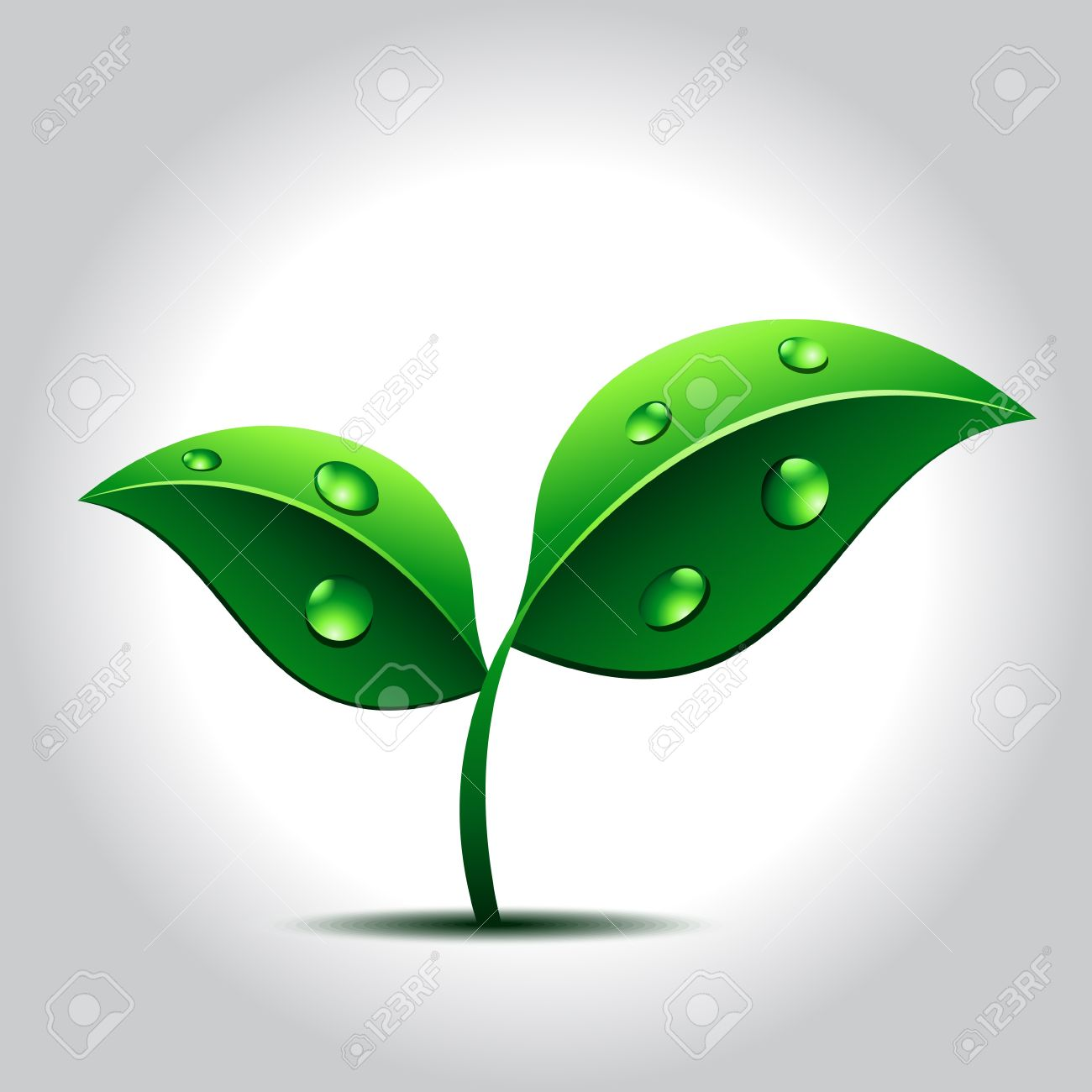 Vector Green Plant With Water Drops On Leaves Royalty Free.