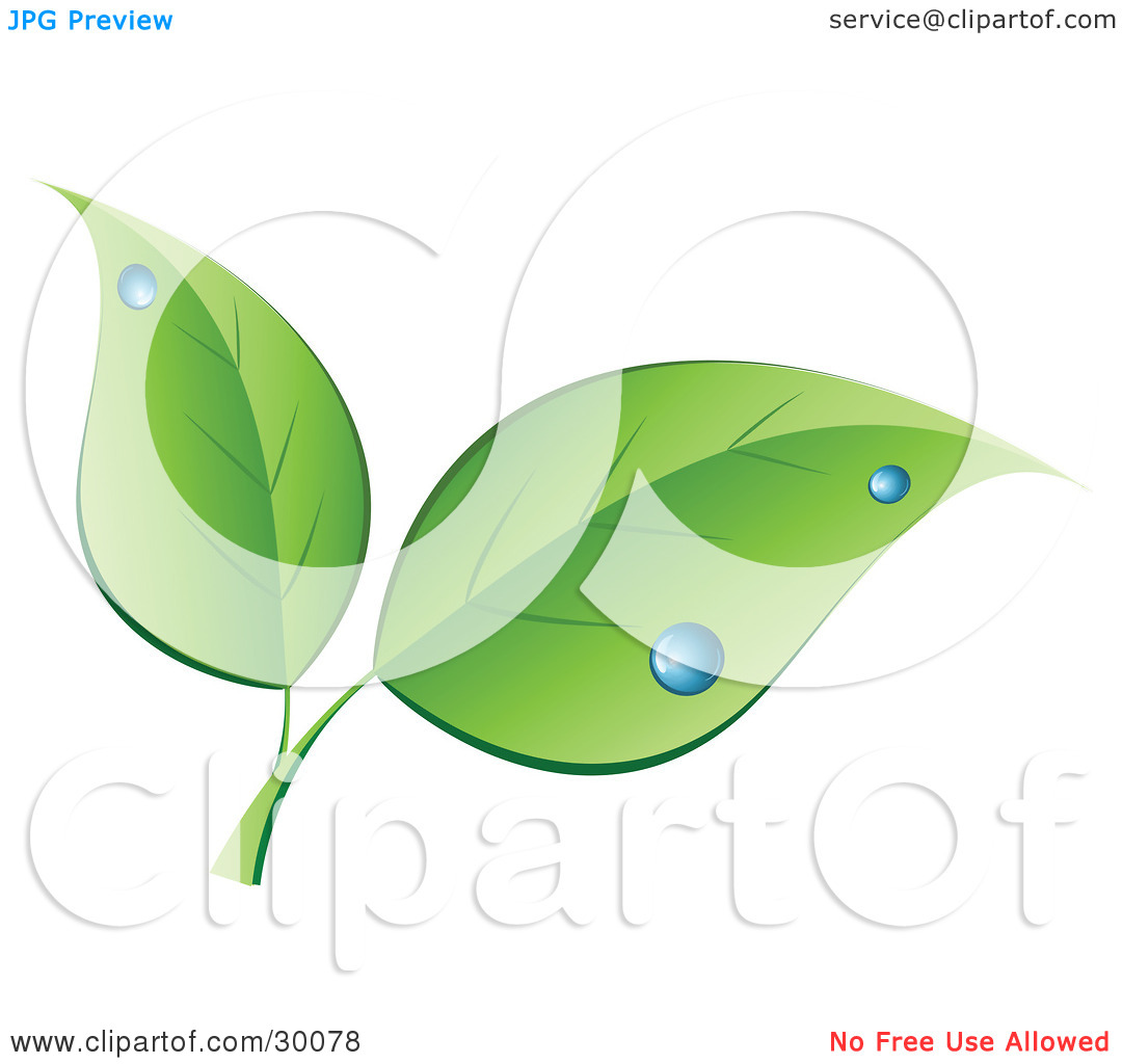 Clipart Illustration of Two Green Leaves With Blue Dew Drops by KJ.