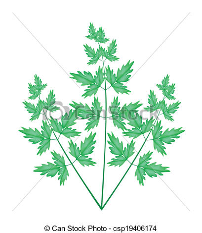 Vectors Illustration of A Fresh Water Dropwort on White Background.