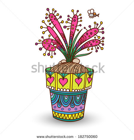 Drosera Stock Photos, Royalty.