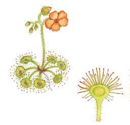Flora of Victoria.