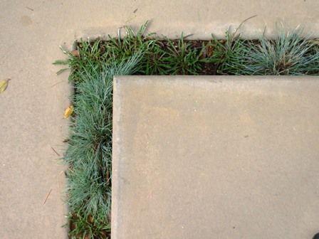 Oltre 1000 immagini su drought tolerant gardening ideas su.
