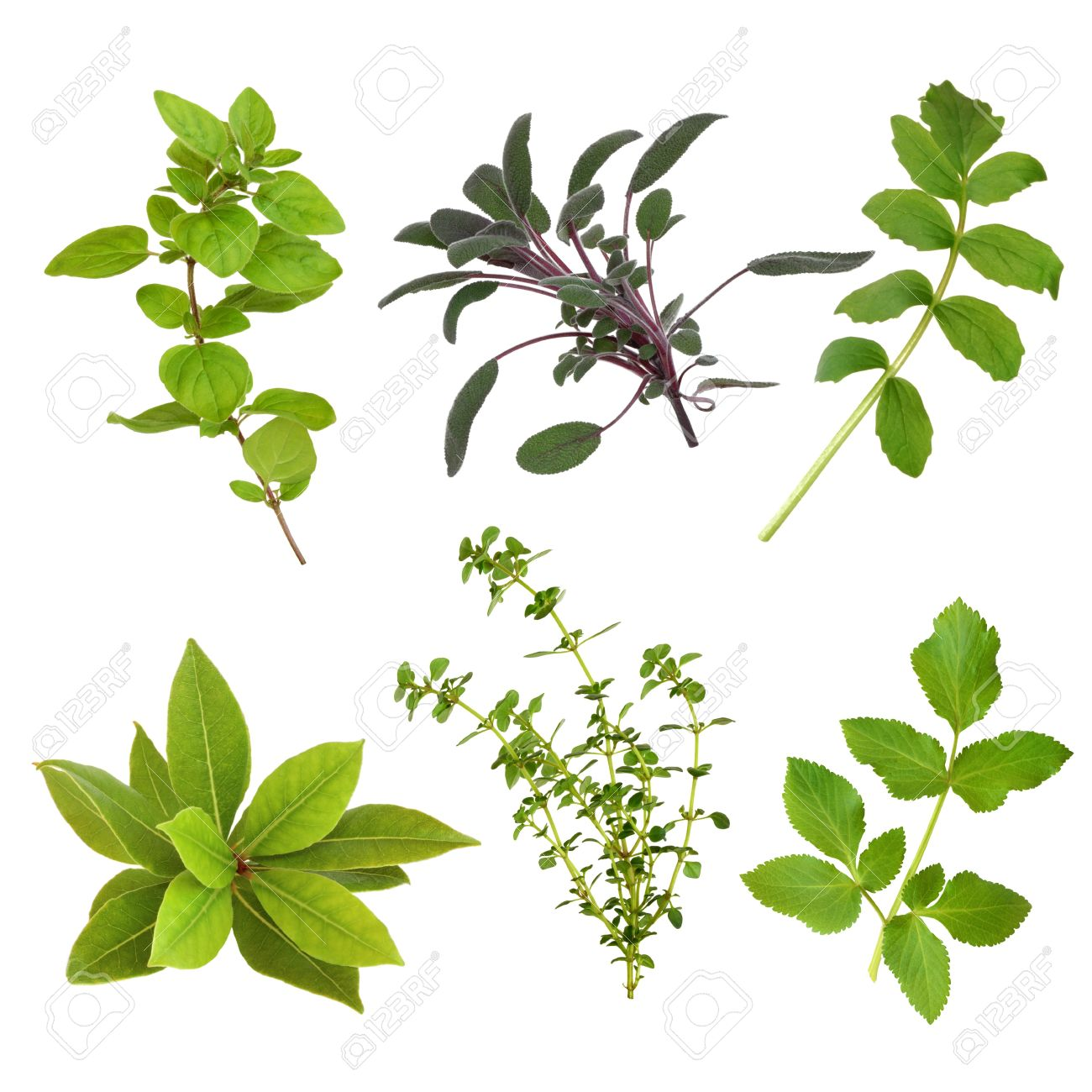 Herb Leaf Selection Of Oregano, Sage, Valerian, Bay, Thyme And.