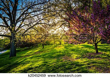 Stock Photograph of Evening light on colorful trees in Druid Hill.