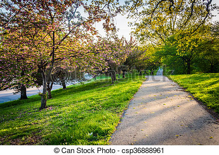 Stock Image of Colorful trees along a path in Druid Hill Park.