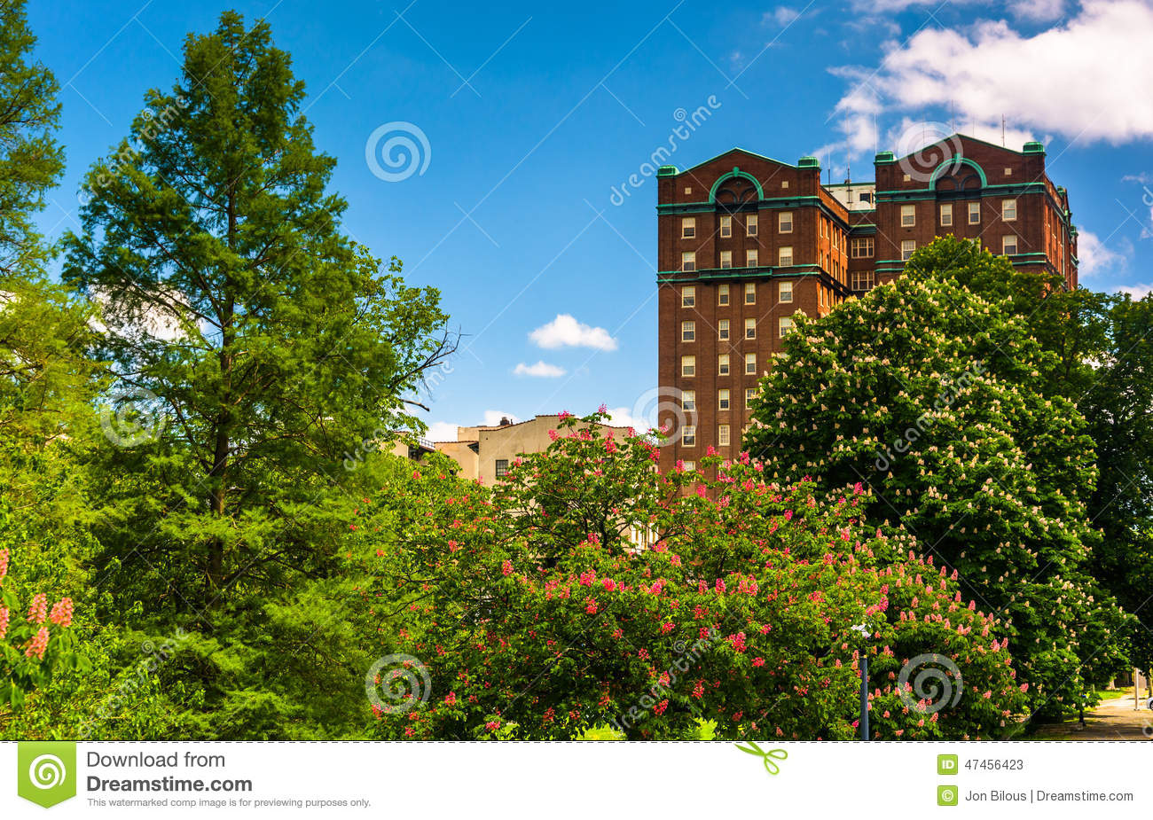 Trees And A Building At Druid Hill Park, In Baltimore, Maryland.