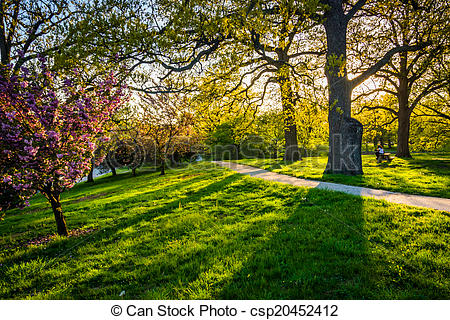 Stock Photography of Evening light on colorful trees in Druid Hill.