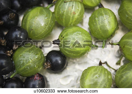 Stock Photo of Blackcurrant, Currants, Drupes, Edible, Food And.