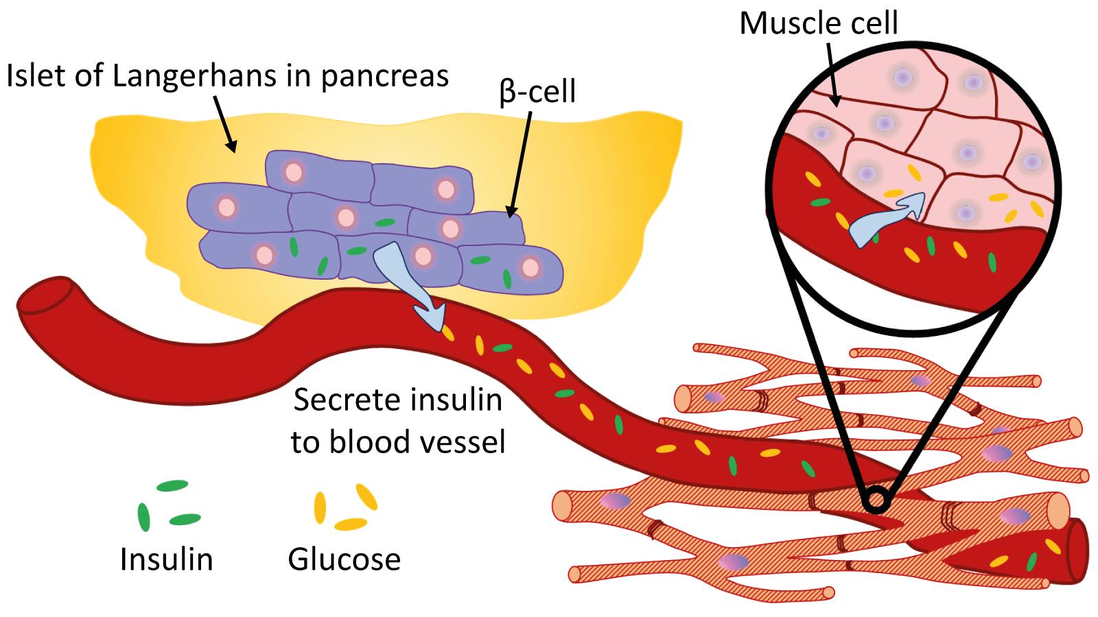TICEBA >< Applications of Stem Cells in Medicine.