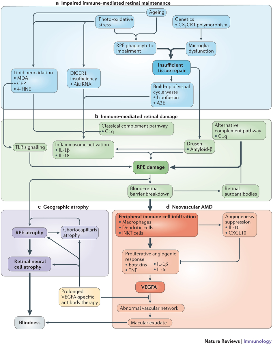 Immunology of age.