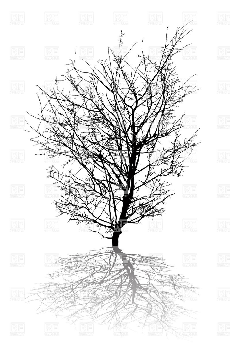 Silhouette of leafless dry tree Vector Image #12537.