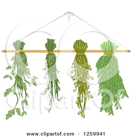 Clipart of Herbs on a Drying Rack.