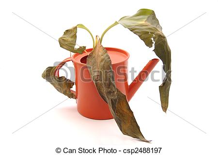 Picture of Sprinkling pot with dry plant csp2488197.
