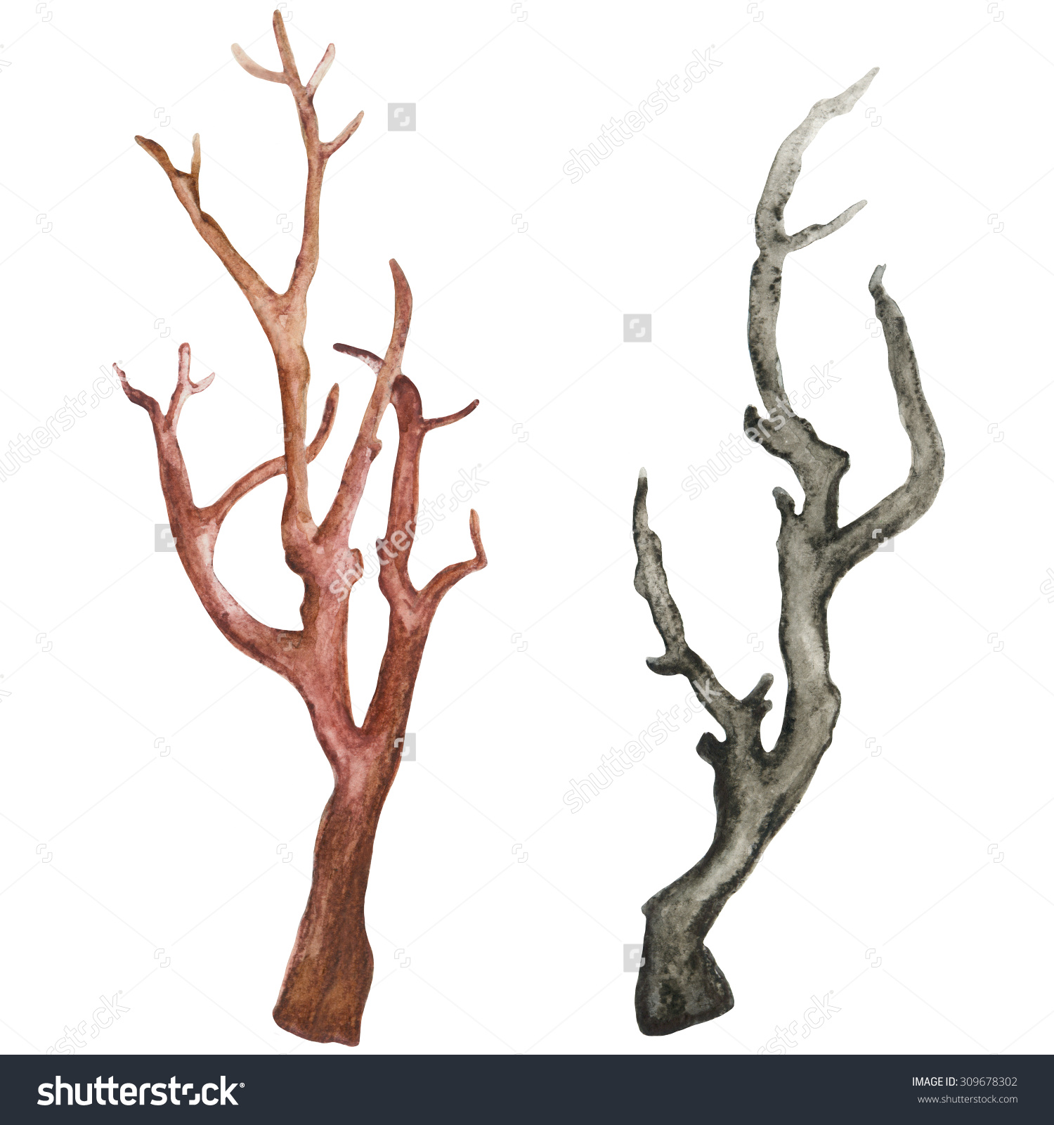 Watercolor Dry Tree Branches Set Isolated Stock Illustration.